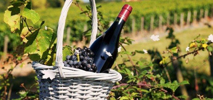 bourgogne-wine